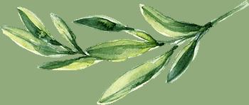 leaf-free-img.png